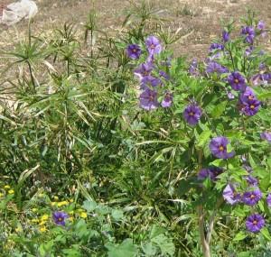 arbusto-con-flor