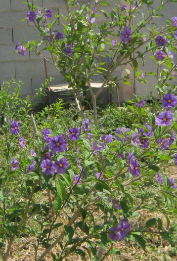 arbusto-ecollavor
