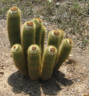 cactus-huerto