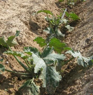 calabacines-ecologicos-22334