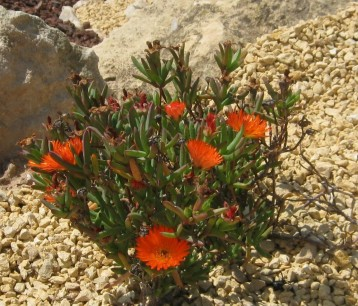 flores-ecollavor
