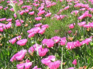 flores-suelo