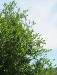 granado-ecologico
