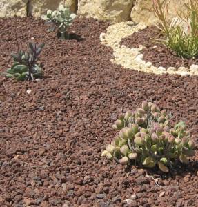 planta-huerto-eco