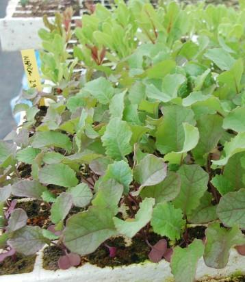 plantones ecologicos napicol