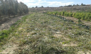 terreny camvi de temporada