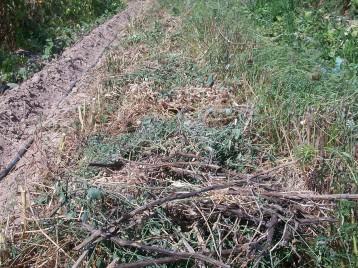 acolchado-plantar