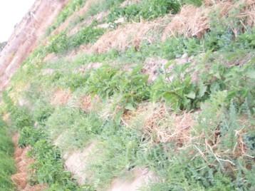 acolchado-sandia-berenjena