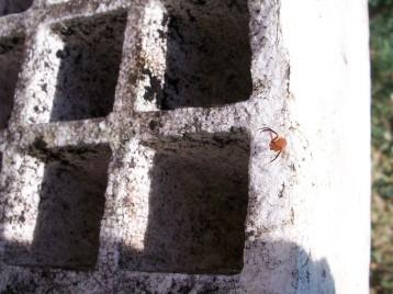 arana-invernadero