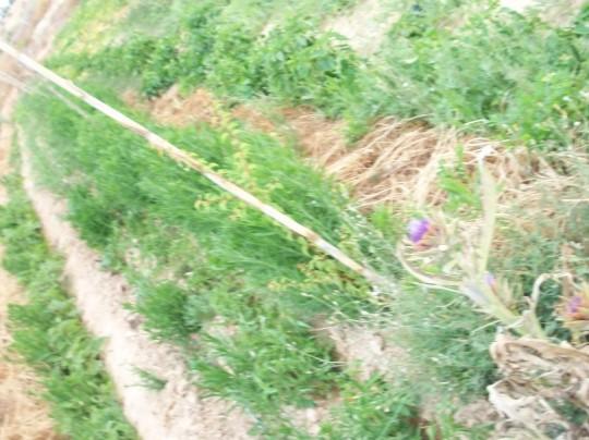 arbol-hueso2-alcachofa-flor