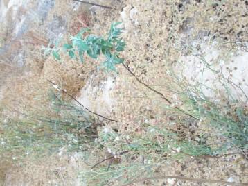 arboles-olivos-de-bohemia