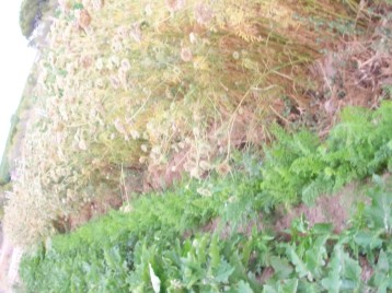 berenjena-rayada-zanahoria