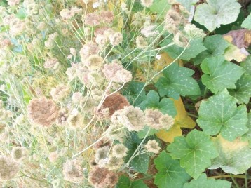 calabaza-rayada-zanhoria-rosa-semillero