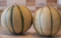 Melon Cantaloupe verdadero y falso