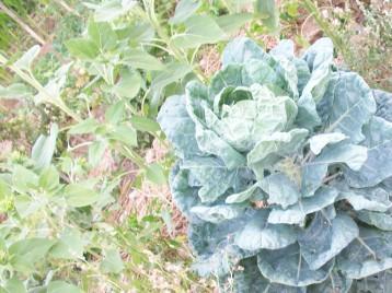 col-monovar-semillero