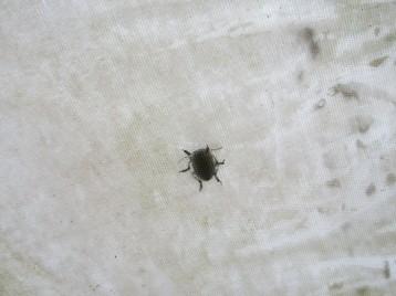 insecto-invernadero