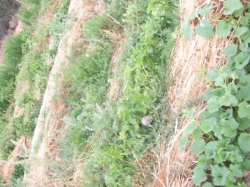 melones-pimiento-sandia