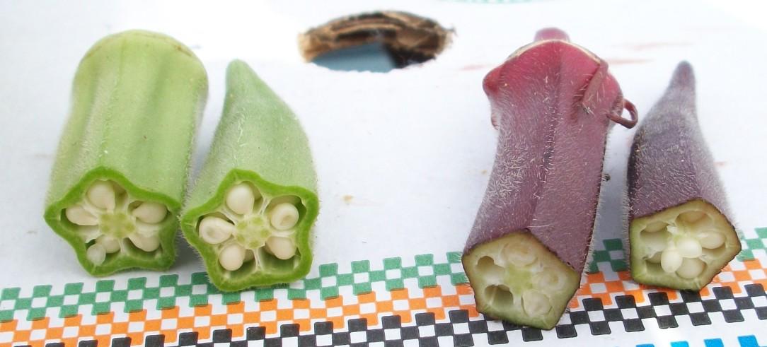 okra-verde-roja