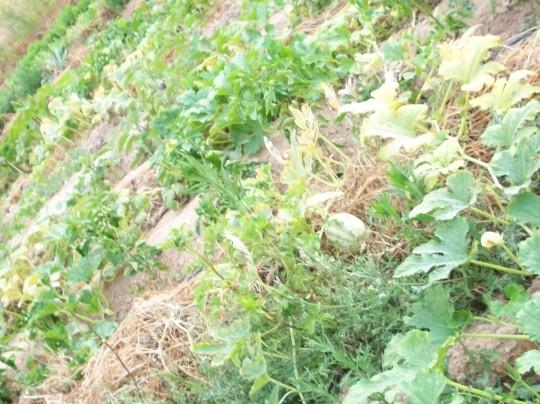 plantas-libres-4