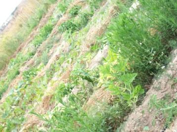 plantas-libres-5