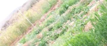 plantas-libres-7