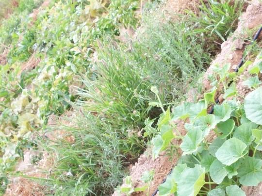 plantas-libres2