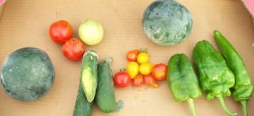sandia-pepino-pimiento-tomate