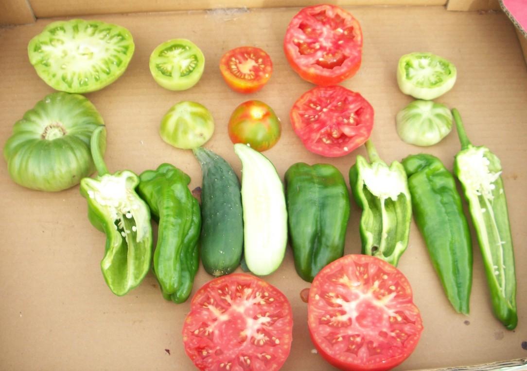 tomate-povedilla-chery-pepino