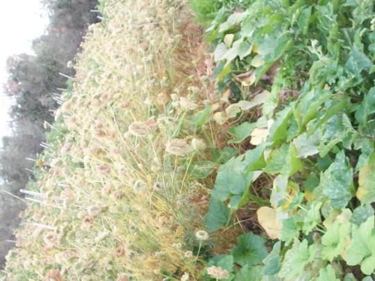 zanahoria-calabaza-berenjena