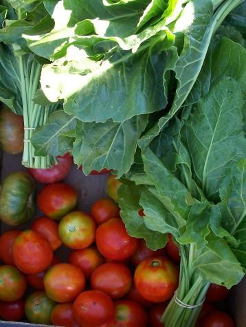 acelga-bianual-tomate-pera
