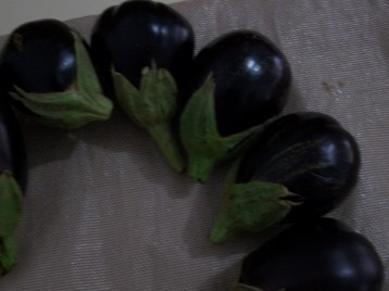 berenjena-de-florencia-negra-redonda-11