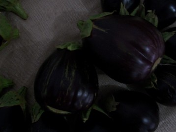 berenjena-de-florencia-negra-redonda-33