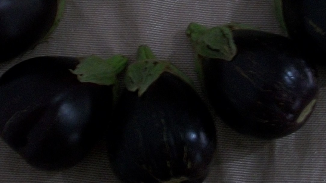 berenjena-de-florencia-negra-redonda-7