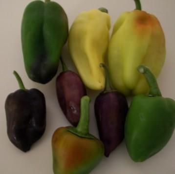 pimiento-color-2