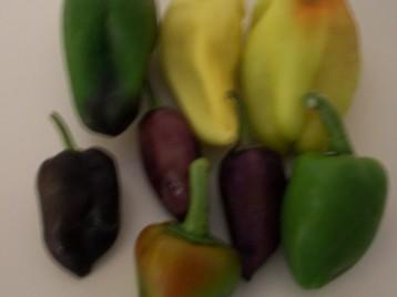 pimiento-color-3
