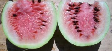 sandia-papaya-4