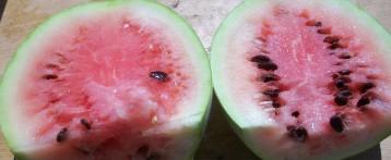 sandia-papaya-6