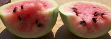 sandia-papaya-7