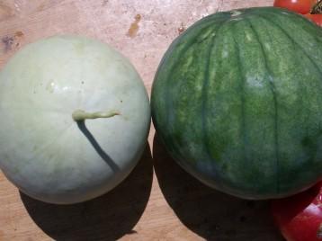 sandia-papaya-calabaza-2