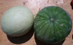 Sandia papaya calabaza