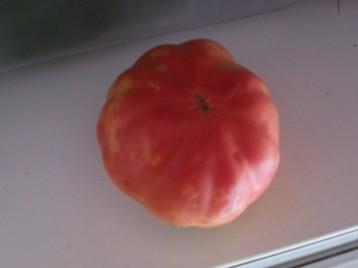 tomate-grecia-333