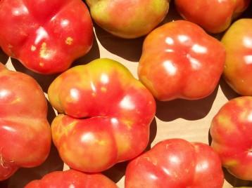 tomate-montserrat-2