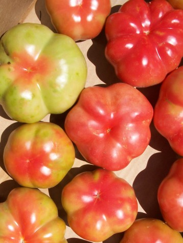 tomate-montserrat-4