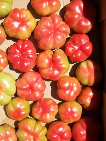 tomate-montserrat