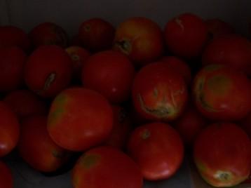 tomate-pera-111