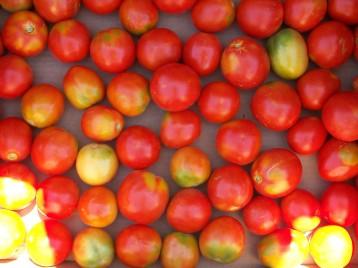 tomate-pera-2
