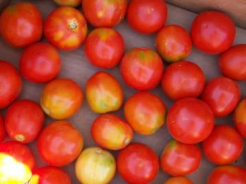 tomate-pera-4
