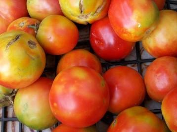tomate-pera-7