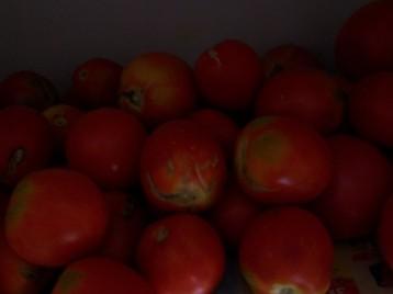 tomate-pera-9