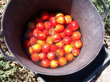 tomate-pera-para-semilla